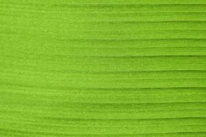närbild av bananblad