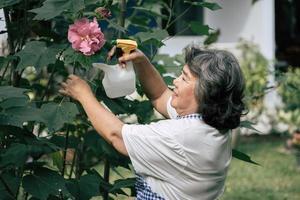 äldre kvinna som samlar blommor i trädgården foto