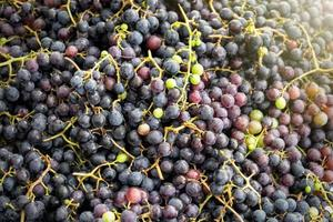 högar med svarta druvor till salu på marknaden foto