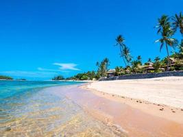 vacker tropisk strand med palmer