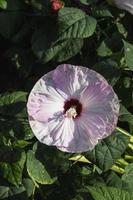 tropisk blomma växt