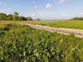 fält för grönt gräs med vandringsled under blå himmel foto