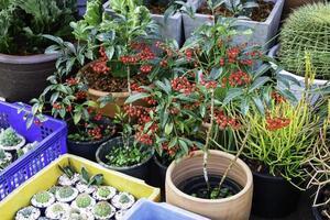 växtodling för växter till salu