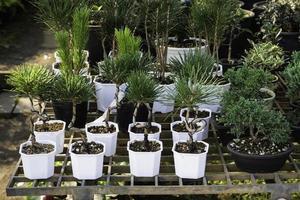 växter i vita krukor