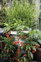växter i en trädgård