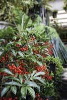 växter i trädgården