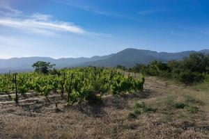 landskap med gröna vingårdar, berg och molnig blå himmel foto