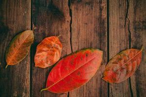 röda löv på trä foto