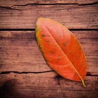 rött blad på trä foto