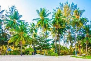 strand med palmer foto