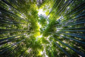 bambulund i skogen vid arashiyama, kyoto foto