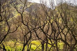 fjädrar träd i morgonsolen foto