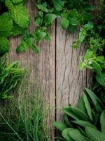 gröna örter på trä foto