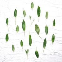 färska salvia lämnar på vit träbakgrund foto