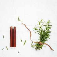 färsk gren av rosmarin med eteriska oljor foto