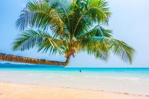 tropisk strand med palmträd