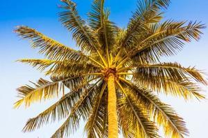 kokosnötpalmträd på himmelbakgrund foto
