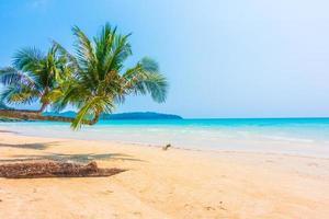 tropisk strand med palmer