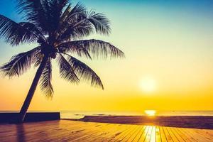 kokosnötpalm vid solnedgången foto