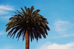 palmträd och blå himmel foto