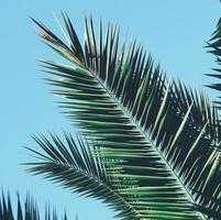 gröna palmblad och blå himmel foto