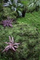 gröna växter i tropisk trädgård