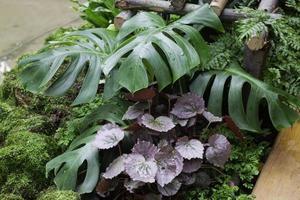 gröna växter i en tropisk trädgård