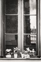 gammalt stadsfönster med växter i Barcelona, Spanien 2019 foto