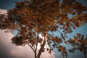 zinslakht träd och bakom det moln och blå himmel foto