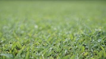 dagg i grönt gräs foto