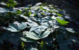 gröna blad naturlig bakgrund