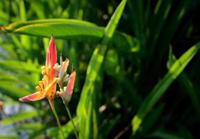 exotisk blomma, paradisfågel bredvid floden foto