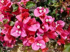 röda blommor och buskar i en trädgård foto