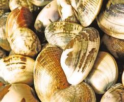 närbild av hög med musslor