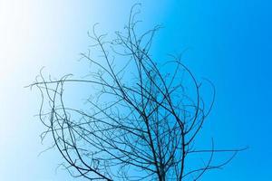 torkat träd på blå himmel foto