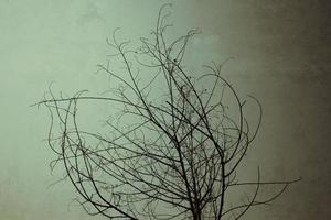 torkat träd på en mörk himmel foto
