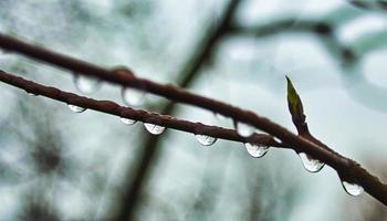 närbild av vattendroppar på en gren