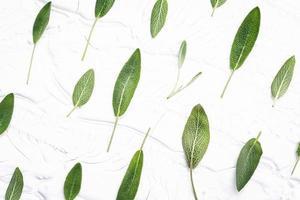 mönster av salvia löv foto
