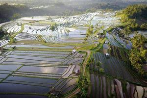 Flygfoto över risterrasser i Bali