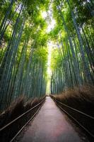 bambulund i skogen vid arashiyama i kyoto, japan foto