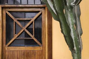 kaktus vid väggen foto