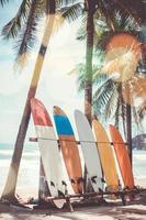 många surfbrädor bredvid kokospalmer på sommarstranden med solljus och blå himmel foto