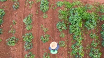 Flygfoto ovanifrån av bönder som arbetar på kassava gård foto