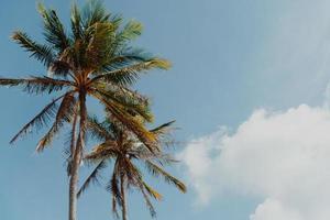 minimala tropiska kokospalmer på sommaren med himmelbakgrund