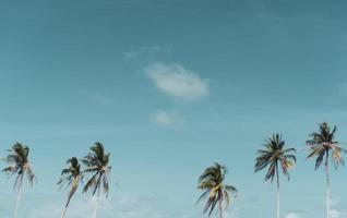 minimala tropiska kokospalmer på sommaren med himmelbakgrund foto