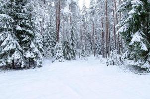 snötäckta träd i vinterskogen foto