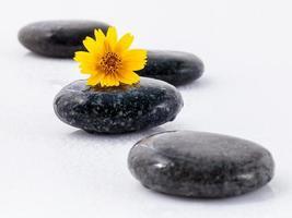gul blomma och stenar foto