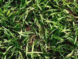 lapp av gräs foto