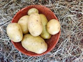 potatis i en flätad korg på hö- eller halmbakgrund foto