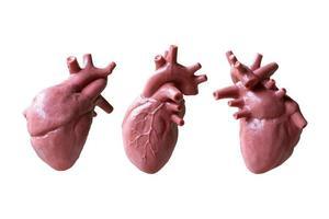 anatomisk modell av ett mänskligt hjärta isolerad på en vit bakgrund
